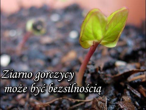 Ks. Piotr Pawlukiewicz - Ziarno gorczycy może być bezsilnością